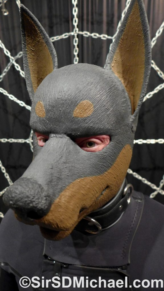 My Rubberdawg Doberman hood, wetsuit, and collar.