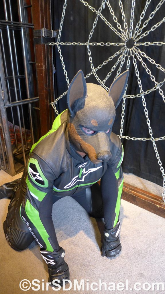 Sitting like a good pup in my leathers, boots, gloves, and hood.